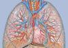 Zakrzepica – przyczyny, objawy i leczenie zapalenia żył